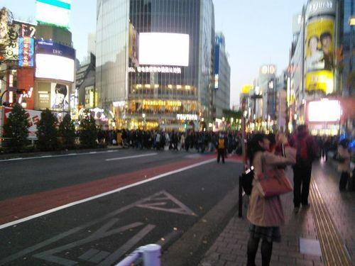 shitami (1).jpg